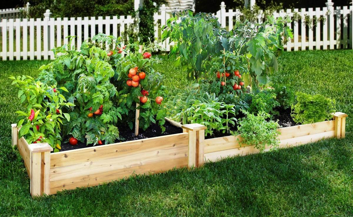 Build a vegetable garden box - Build A Vegetable Garden Box 20